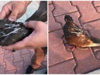 FETÖ'nün posta güvercini yakalandı! Bakın nereye haber taşıyordu...
