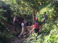 Sakarya'da mevsimlik facia! Traktör devrildi çok sayıda ölü var...