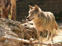 Karatay'da hayvanlar koruma altında