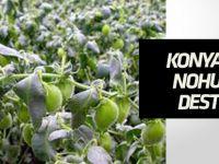 Konya'da nohut üretimine bakanlık destek verecek