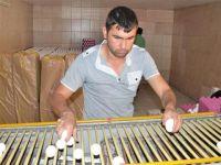 Köyde kurduğu modern tesiste yumurta üretiyorKöyde kurduğu modern tesiste yumurta üretiyor