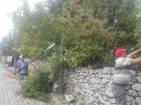 Beyşehir'de ağaç budama çalışmaları