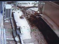 Hafriyat kamyonu yarım asırlık ağacı böyle devirdi