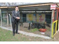 """""""İlkokulun tavukları"""" ihtiyaç sahibi öğrenciler için yumurtluyor"""