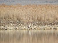 Konya'da kış ortası kuş sayımları