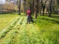 Seydişehir Belediyesi Çim Biçme Çalışmaları Başladı