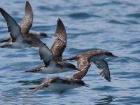 Balıkçılara 'yelkovan' uyarısı
