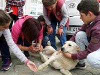 Ders aralarında sokak hayvanlarını besliyorlar