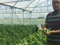 Beyşehir'deki seralarda ilk hasat sevinci