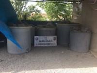 Akhisar'daki zeytin hırsızlığı