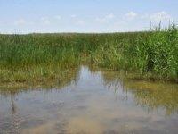 Yağışlar, Akşehir Gölü'ne can suyu oldu