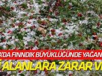 Beyşehir'de dolu ekili alanlara zarar verdi