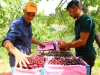 Konya'dan Çin ve Rusya'ya kiraz ihracatı