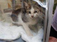 Yavru kediyi  AFAD kurtardı