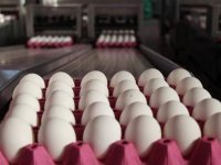 'Yumurta yüzde 18 zamlandı'
