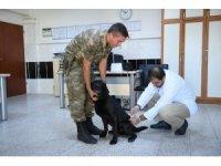Mayın arama köpeklerinin tedavisi Malatya'da yapıldı