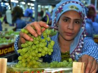 Sultaniye üzümde hasat ve ihracat sevinci