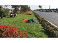 Refüjdeki çiçekleri sulamak isterken otomobilin çarpması sonucu öldü