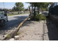 Otomobil ağaca çarptı:3 yaralı