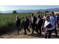 Türk-Özbek işbirliği pamuğa yarayacak