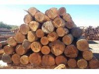 Çamlıdere Orman İşletme Müdürlüğünden 4 milyon lira gelir