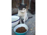 Ankara'da kediye işkence iddiası