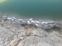 Büyükorhan'da toplu balık ölümleri korkuttu