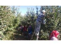 Isparta'da bu yıl 630 bin ton elma rekoltesi beklentisi
