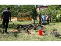 Erciş'te toplu hindi ölümü