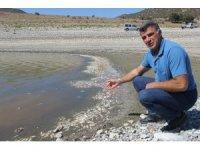Porsuk Barajı'nda esrarengiz balık ve kerevit ölümleri