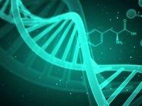 """Tüketilen gıdanın DNA'ya """"net"""" etkileri tespit edildi"""