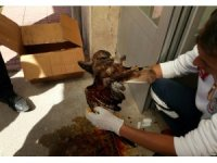 Yaralı şahine ilk müdahale acil sağlık ekibinden