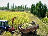 Seydişehir'de mısır üretimi arttı