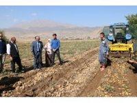 Yerli patatesler hasat edildi
