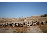 Çobanlık yaparak hayata tutundu