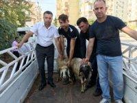 Erdemli'de genç çiftçilere koyun dağıtıldı