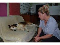 Ordu'da köpeğe işkence iddiası