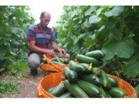 Yılda 1 milyon 750 bin ton salatalık üretiyor, doğunun ihtiyacının karşılıyor