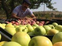Yalıhüyük'te 2018 yılında 250 ton elma üretildi