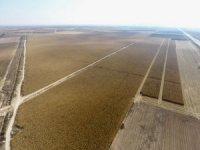 Çumra'da mısır hasadına başlandı