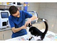 Diş sorunu yaşayan kediye belediye yardım etti