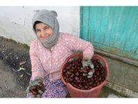 Denizli'nin bin rakımlı köyünden Arap ülkelerine kestane ihracatı
