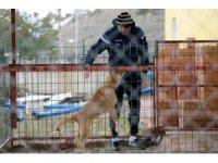 E.Yeni Malatyaspor'un 'Cesur'u artık genç bir köpek
