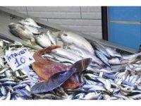 Sinop'ta balıkçılar umutlarını dip balıklarına bağladı