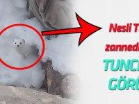 Tunceli'de 'beyaz gelincik' görüntülendi