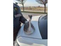 Yaralı kuş koruma altına alındı
