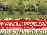 Hayvancılık projelerine yüzde 50 hibe desteği