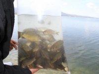 Beyşehir Gölü'ne yavru sazan takviyesi