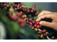 Türkiye'de yılda 100 bin tona yakın kahve tüketiliyor