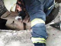 Sarnıca düşen yavru kedileri itfaiye kurtardı